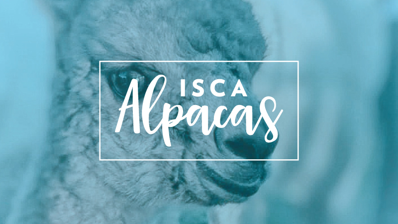 Isca Alpaca website